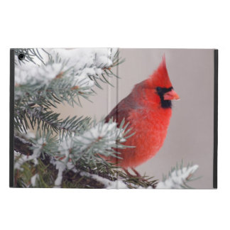 Northern Cardinal Perched In A Tree Cover For iPad Air