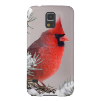 Northern Cardinal Perched In A Tree Galaxy S5 Case