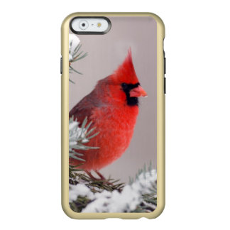 Northern Cardinal Perched In A Tree Incipio Feather® Shine iPhone 6 Case