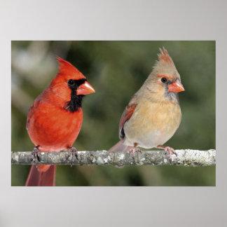 Northern Cardinal Photograph Poster