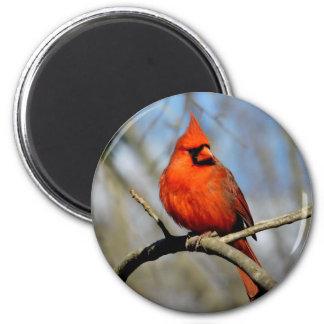 Northern Cardinal (Sunny) Round Magnet