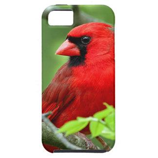 Northern cardinals iPhone 5 case