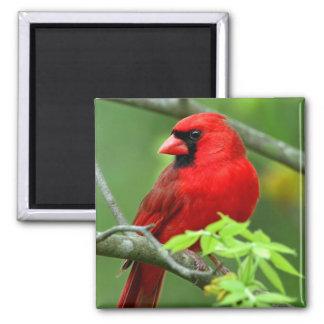 Northern cardinals magnet