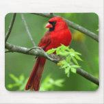 Northern cardinals mousemat