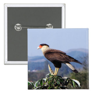 Northern Crested Caracara Bird of Prey on tree 15 Cm Square Badge