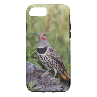 Northern Flicker, Colaptes auratus, Red-shafted iPhone 7 Case