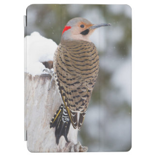 Northern Flicker male in winter iPad Air Cover