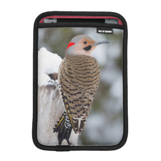 Northern Flicker male in winter iPad Mini Sleeve