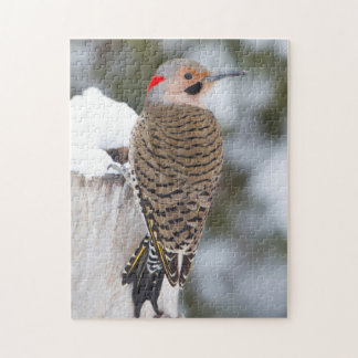Northern Flicker male in winter Jigsaw Puzzle