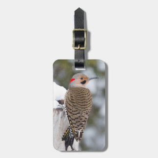 Northern Flicker male in winter Luggage Tag