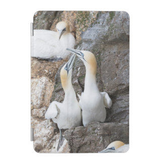 Northern Gannet Pair Greeting iPad Mini Cover