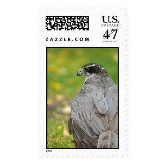 Northern Goshawk customizable business suite Stamps