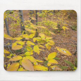 Northern hardwood forest in New Hampshire USA Mousepad