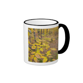 Northern hardwood forest in New Hampshire USA Coffee Mugs
