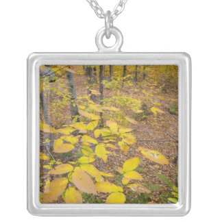 Northern hardwood forest in New Hampshire USA Square Pendant Necklace
