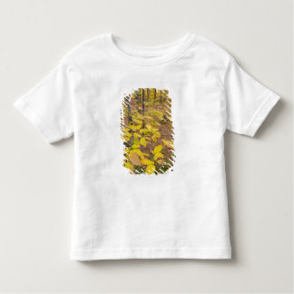 Northern hardwood forest in New Hampshire USA T Shirt