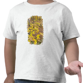 Northern hardwood forest in New Hampshire USA Tees