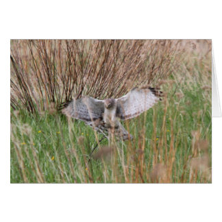Northern Harrier II Cards