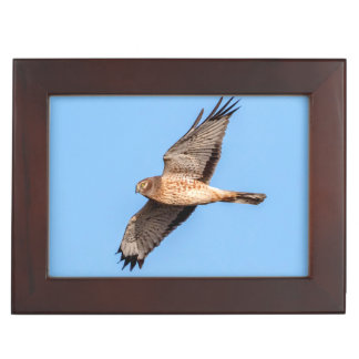 Northern Harrier in Flight Keepsake Box