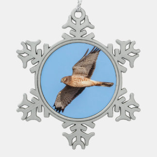 Northern Harrier in Flight Pewter Snowflake Decoration