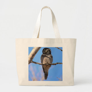 Northern Hawk Owl 4 Bags