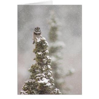 Northern Hawk Owl (Surnia ulula) Season's Greeting Card