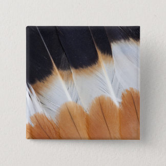 Northern Lapwing Feather Abstract 15 Cm Square Badge