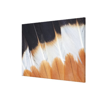 Northern Lapwing Feather Abstract Canvas Print