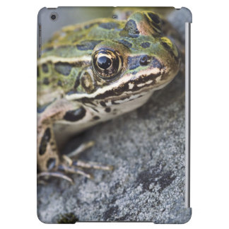 Northern Leopard frog, See-through Island,