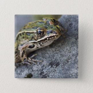 Northern Leopard frog, See-through Island, 15 Cm Square Badge