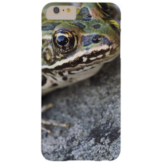 Northern Leopard frog, See-through Island, Barely There iPhone 6 Plus Case