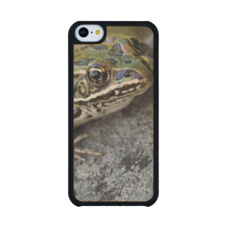 Northern Leopard frog, See-through Island, Carved® Maple iPhone 5C Case