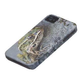 Northern Leopard frog, See-through Island, Case-Mate iPhone 4 Cases
