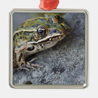 Northern Leopard frog, See-through Island, Christmas Ornament
