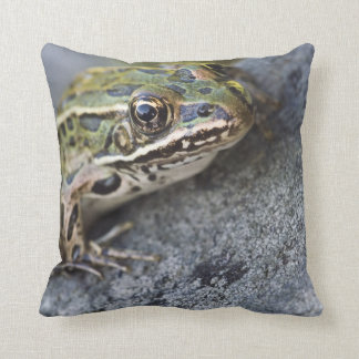 Northern Leopard frog, See-through Island, Cushion