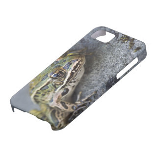 Northern Leopard frog, See-through Island, iPhone 5 Case