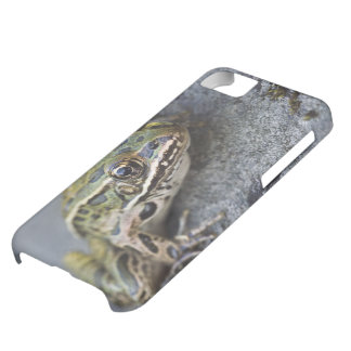 Northern Leopard frog, See-through Island, iPhone 5C Case