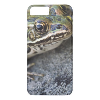 Northern Leopard frog, See-through Island, iPhone 8 Plus/7 Plus Case