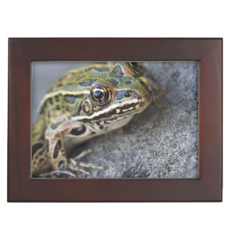Northern Leopard frog, See-through Island, Keepsake Box
