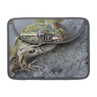 Northern Leopard frog, See-through Island, Sleeves For MacBooks