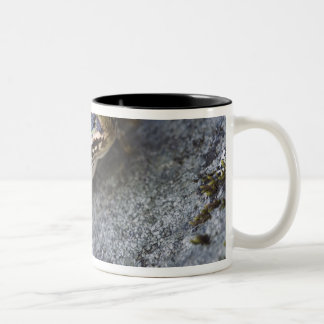 Northern Leopard frog, See-through Island, Two-Tone Coffee Mug