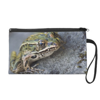 Northern Leopard frog, See-through Island, Wristlet Clutch