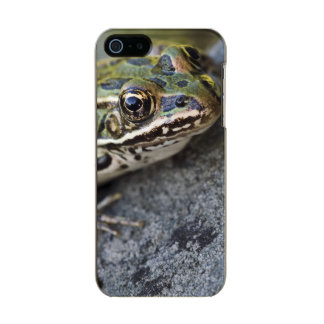 Northern Leopard frog, See-through Island, Incipio Feather® Shine iPhone 5 Case