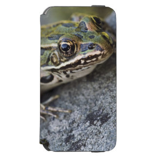 Northern Leopard frog, See-through Island, Incipio Watson™ iPhone 6 Wallet Case
