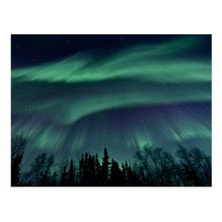 Northern Lights of Alaska Postcard