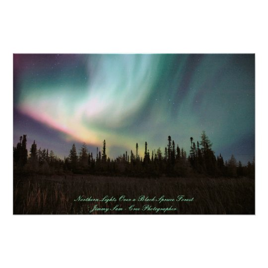 Northern Lights Over a Black Spruce Forest Poster