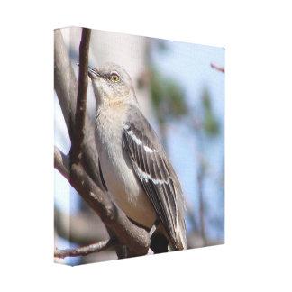 Northern Mockingbird Canvas Prints