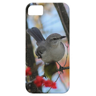 Northern mockingbird case for the iPhone 5