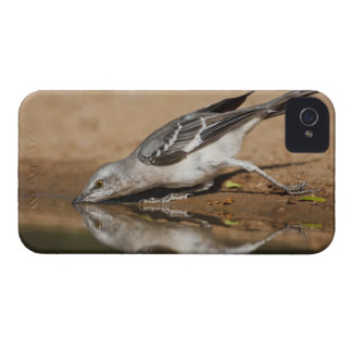 Northern Mockingbird drinking at south Texas pon Case-Mate iPhone 4 Case