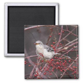 Northern Mockingbird Magnet